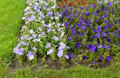 Colorful flower in summer park. Stock Photography
