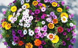 Colorful flower. In sunny day Stock Images
