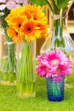 Colorful flower in vase Royalty Free Stock Photography
