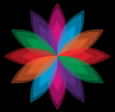 Colorful flower vector on black background Stock Photo