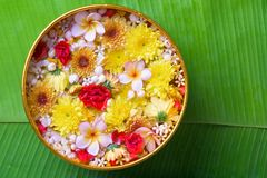 Colorful flower in water bowls decorating on Banana leaf for Songkran Festival or Thai New Year.  Stock Photos