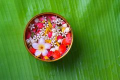 Colorful flower in water bowls decorating on Banana leaf for Songkran Festival or Thai New Year.  Stock Images