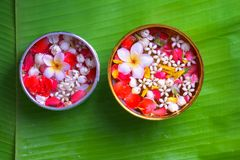 Colorful flower in water bowls decorating on Banana leaf for Songkran Festival or Thai New Year.  Royalty Free Stock Photos