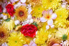 Colorful flower in water bowls decorating for Songkran Festival. Or Thai New Year Royalty Free Stock Photography