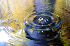 Colorful flower of water reflection and water drop Stock Photos