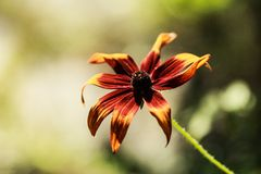 Colorful flower. Royalty Free Stock Photos