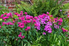 A colorful flowerbed. A colorful flowerbed with crimson beebalm and phlox in a cottage garden Royalty Free Stock Images