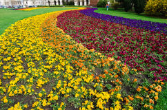Colorful Flowerbed Royalty Free Stock Image