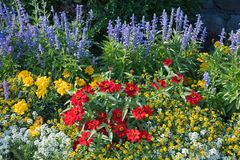 Colorful flowerbed with salvia, tagetes, alyssum, zinnias and sa. Colorful flower bed with salvia, tagetes, alyssum, zinnias and sanvitalia in the garden royalty free stock photography