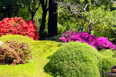 Colorful flowering bushes Stock Photo