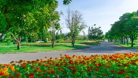 Colorful flowering plant and green grass lawn under group of trees in a good care maintenance garden, grey color concrete. Of curve walkway in the middle of the stock images