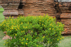 Colorful flowering plant. With old brick wall in the background Stock Photo