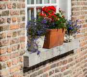Colorful flowering plants in pots Stock Photo