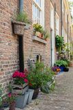 Colorful flowering potted plants in an old Dutch beguinage. Colorful blooming potted plants in the historic beguinage in the Dutch city of Breda, North Brabant Royalty Free Stock Images