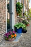 Colorful flowering potted plants in an old Dutch beguinage. Colorful blooming potted plants in the historic beguinage in the Dutch city of Breda, North Brabant Stock Photos