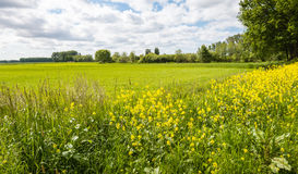 Colorful flowering wild plants at the edge of a pasture Stock Photography