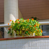 Colorful flowerpot on the balcony Stock Photos