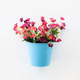 Colorful flowerpot on the wall Royalty Free Stock Images