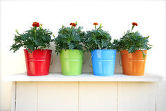 Colorful flowerpots. Photo of flowers in colorful flowerpots Stock Photos
