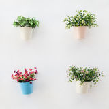 Colorful flowerpots on  the white wall Stock Image