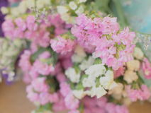 Colorful flowerr Royalty Free Stock Images