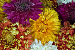 Colorful Flowers Stock Photos