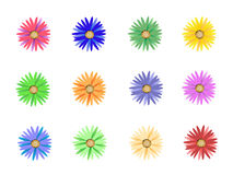 Colorful flowers. Some beautiful and colorful flowers for design Royalty Free Stock Images