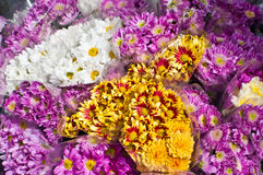 Colorful flowers. With sunlight in the market place royalty free stock image