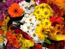 Colorful flowers. (gerbera and daisies) wallpaper background Royalty Free Stock Photo