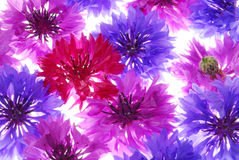 Colorful flowers royalty free stock images