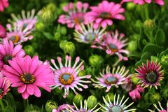 Colorful flowers. Nice colorful flowers Royalty Free Stock Photo