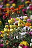 Colorful Flowers in Spring for Background or Pattern Stock Images