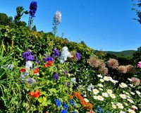 Colorful flowers along walkway of Flower Bridge. Flowers of many colors, red, blue, white, orange, purple. clear blue skies. sunny warm day in Shelburne Falls stock image