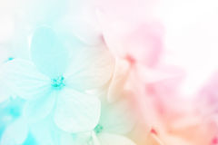 Colorful flowers background, fresh summer in soft style Stock Photos