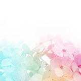 Colorful flowers background, fresh summer in soft style Stock Images