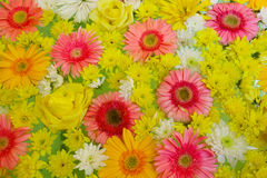 Colorful flowers background pattern Stock Image