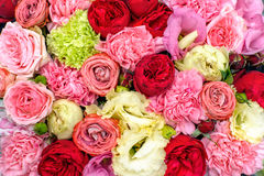 Colorful flowers background Royalty Free Stock Photo