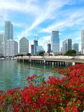 Colorful flowers Biscayne bay skyline photo Royalty Free Stock Image
