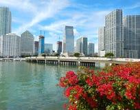 Colorful flowers Biscayne bay skyline photo. Miami florida usa stock photos