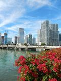 Colorful flowers Biscayne bay skyline photo Royalty Free Stock Photography