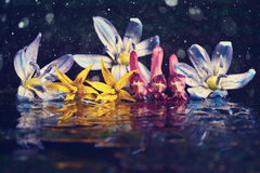 Colorful flowers on black background reflection Royalty Free Stock Images
