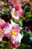 Colorful flowers in bloom Royalty Free Stock Images