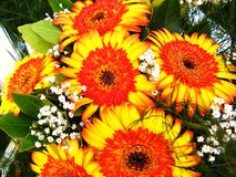 Colorful flowers in bloom. Closeup of colorful orange and yellow flower bouquet in bloom Stock Photo