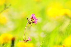 Colorful flowers in bloom Stock Images