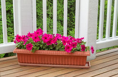 Colorful flowers in bloom on cedar wood deck with trees in backg Stock Photo