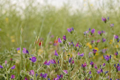 Colorful flowers in bloom on a springtime field Stock Image