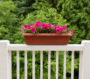 Colorful flowers in bloom on white patio railing Stock Photos