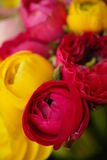 Colorful flowers blooming Stock Photo