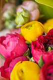 Colorful flowers blooming Stock Photography