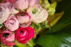 Colorful flowers blooming Stock Images